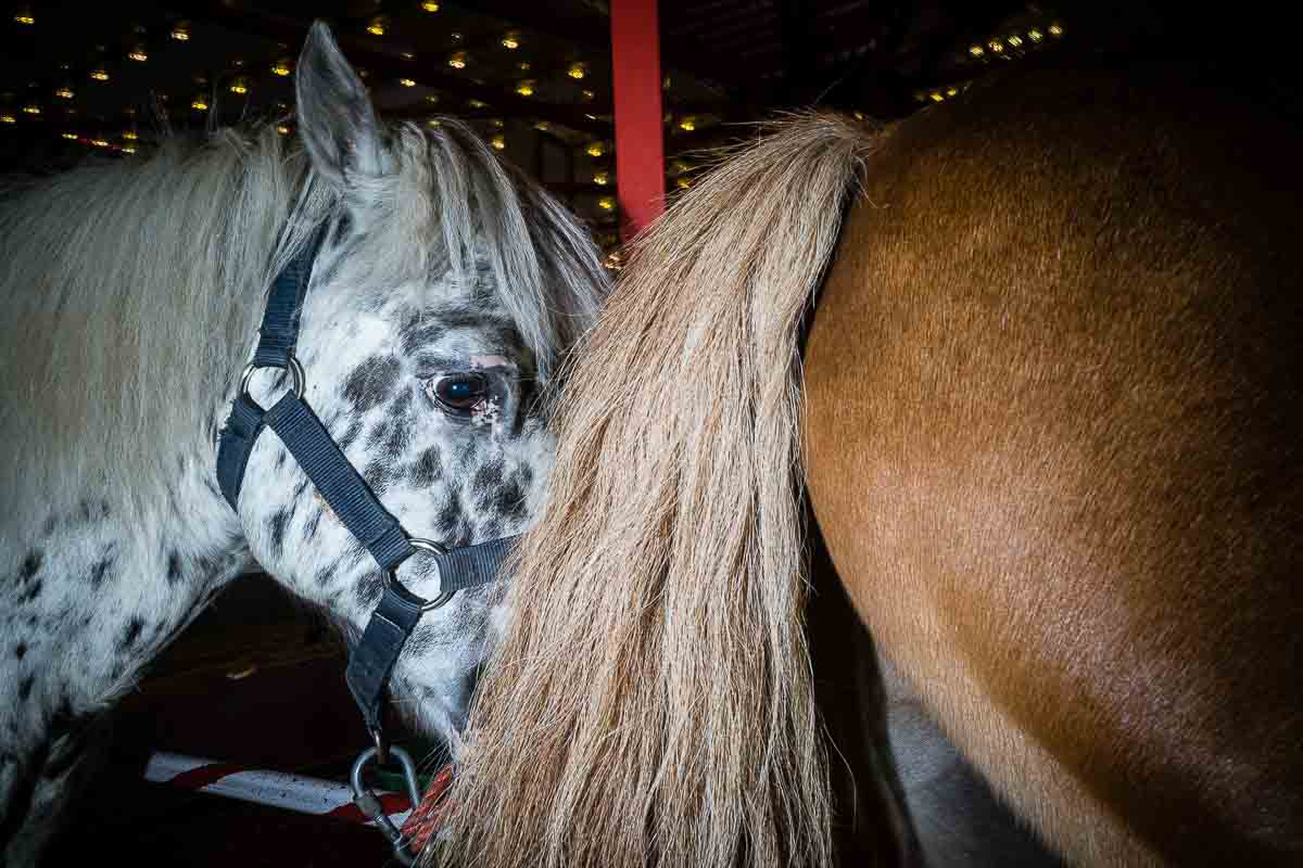 Close up flash street photograph of a couple of horses very close to each other in Brussels