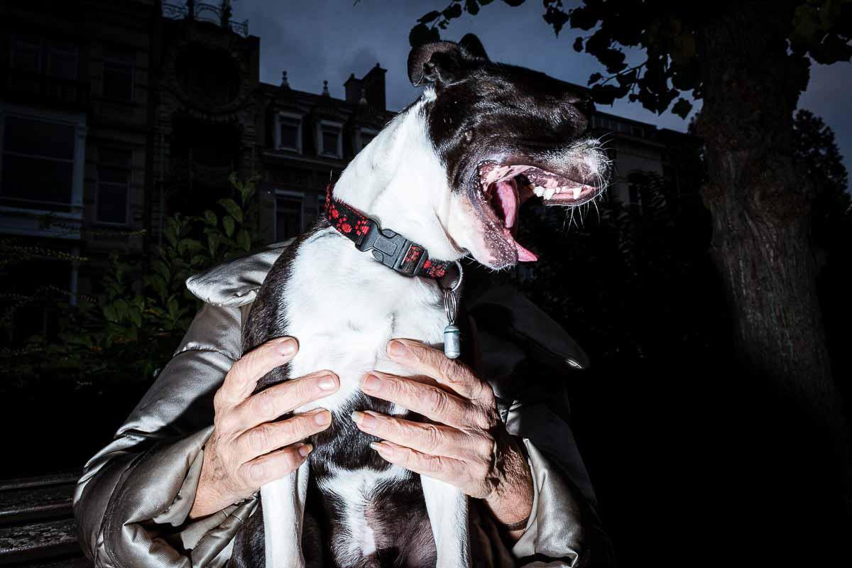 Close up flash street photograph of a dog yawning while sitting on its owner legs