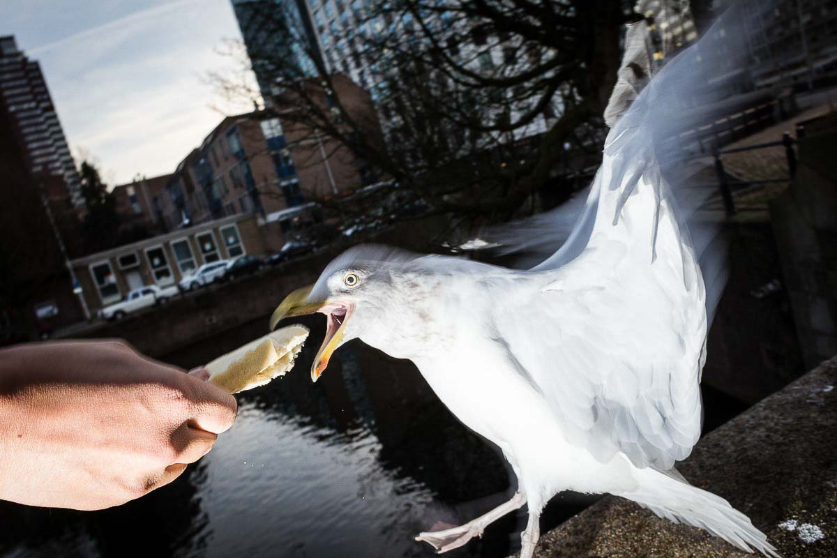 Close up flash street photograph of a seagull about to eat a piece of bread from somebody's hand